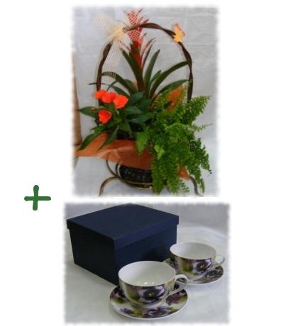 kosz kwiatów doniczkowych + 2 porcelanowe filiżanki